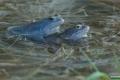 żaby_006