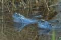 żaby_008