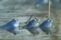 żaby_015